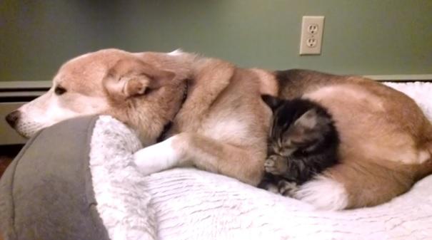 Смешные гифы с кошками и собаками